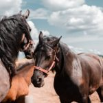 Most Beautiful Horse Breeds in the world