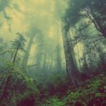 Forests And Their Facts In Brief